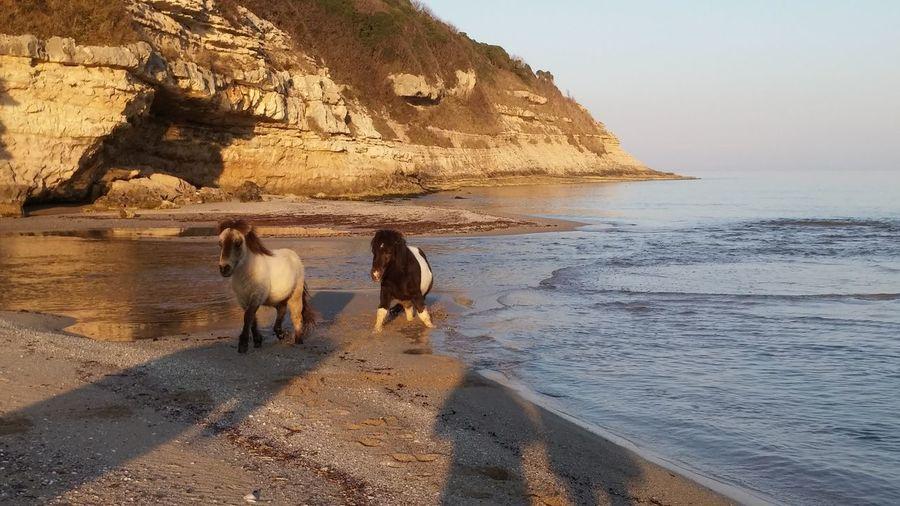 Ponys Sea Beachphotography Happyday EyeEm Nature Lover Animal Photography Beach Nature_collection EyeEm Best Shots - Nature