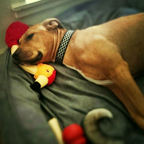 He sleeps with his toys.