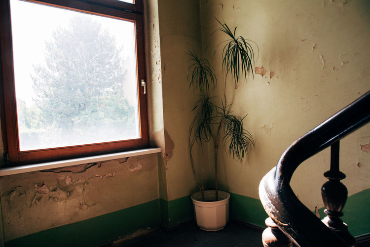 Berlin hallway Hallway Paint Apartment Building Day Domestic Room Glass - Material Home Home Interior House Indoors  Nature No People Old Plant Potted Plant Reiling Still Life Tree Wall - Building Feature Window