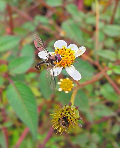 Um trabalho perfeito Beauty In Nature Brasil ♥ Coisa De Deus Coisa De Deus Natureza Perfeita Flower Insect Insetosdobrasil Peruíbe Pollination Wasp Macro Wasp Wasp Nest