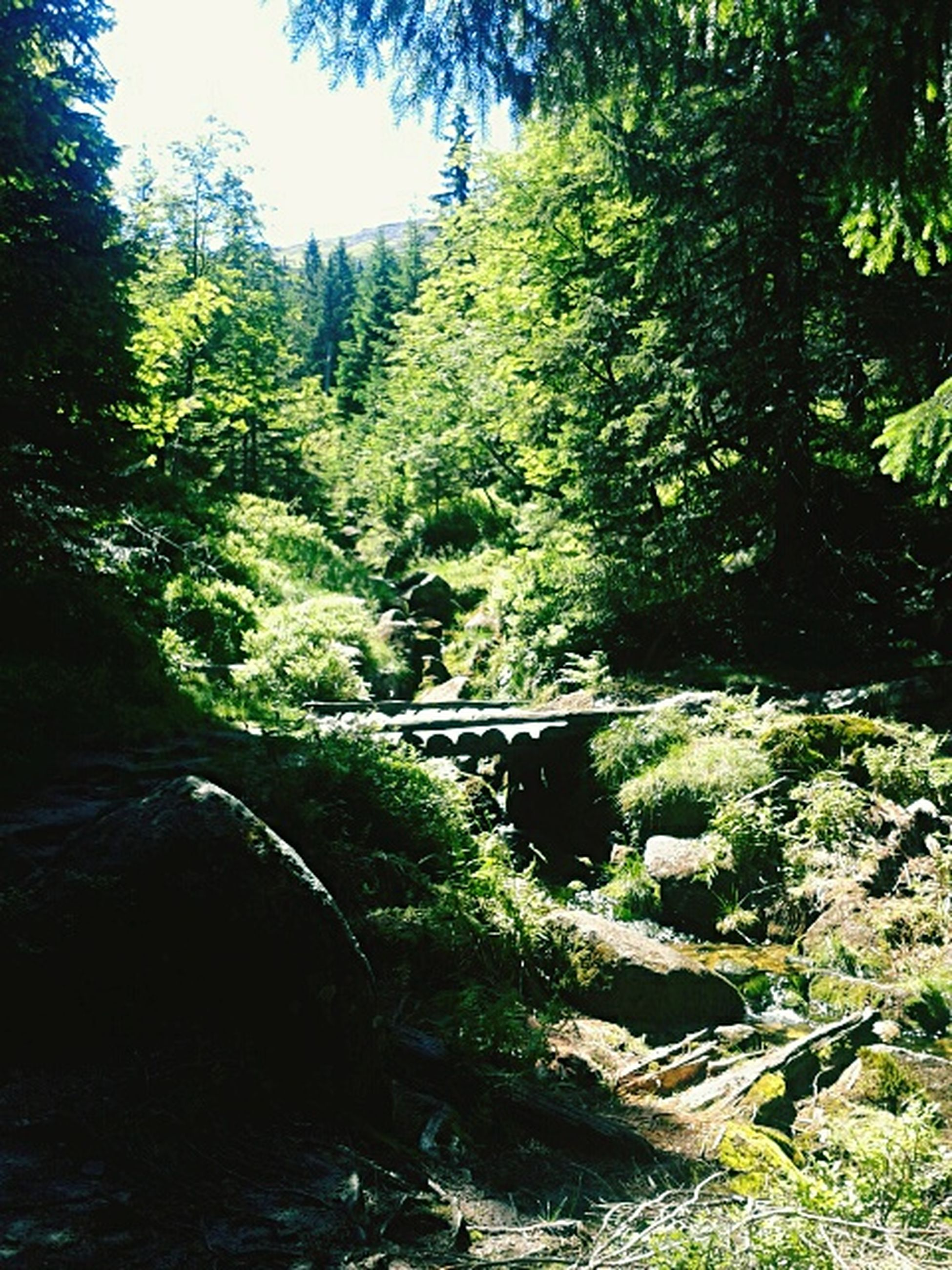tree, stream, growth, tranquil scene, tranquility, scenics, water, nature, green color, beauty in nature, plant, non-urban scene, flowing, sunny, mountain, day, green, outdoors, woodland, no people, solitude, remote, vacations