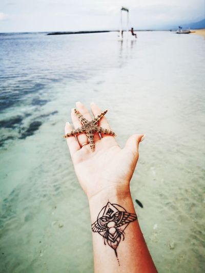Cropped hand of person holding starfish