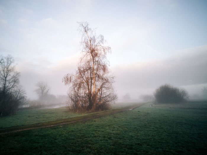 Tree Landscape Environment Plant Grass Tranquility Tranquil Scene Fog Sky Land Nature Field Non-urban Scene No People Beauty In Nature Scenics - Nature Day Rural Scene Cloud - Sky Outdoors