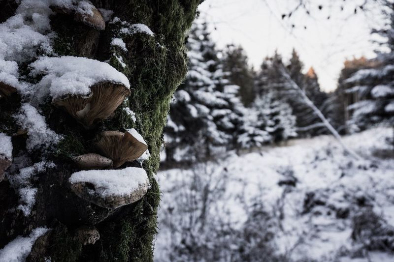 Winter Cold Temperature Snow Nature Beauty In Nature Frozen Tree Tranquility Outdoors Landscape Mushrooms Germanroamers Eifel Theoutdoorguide