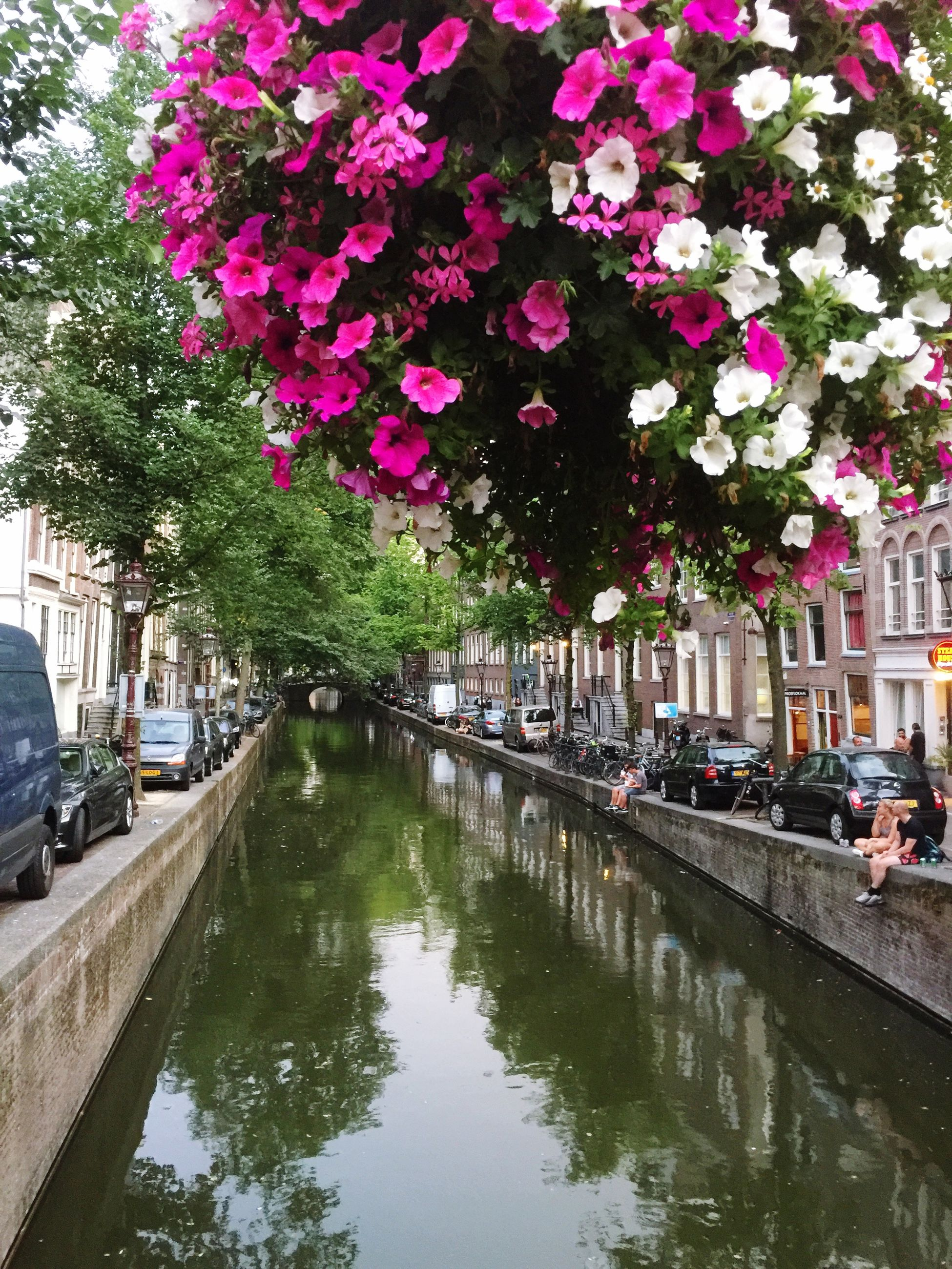 plant, water, flower, architecture, flowering plant, reflection, tree, built structure, nature, incidental people, building exterior, motor vehicle, transportation, city, mode of transportation, car, canal, day, growth, outdoors