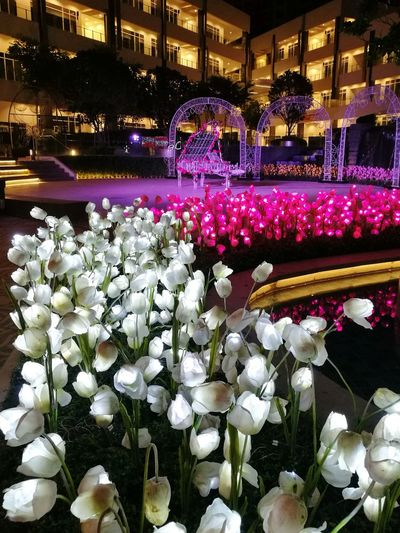 Flower Abundance Night Illuminated Variation Retail  Indoors  No People Fragility Freshness Flower Head Close-up Piano Moments Piano LED LED Flower Oo Colors