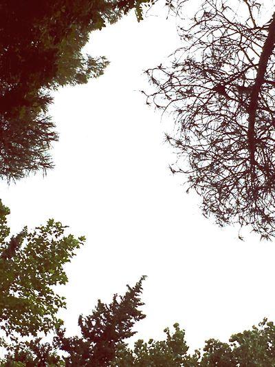 Sky/nature