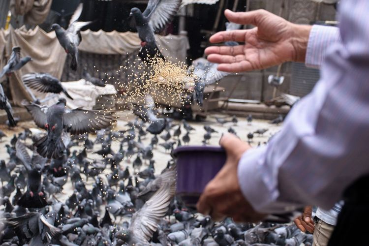 Midsection of man feeding birds