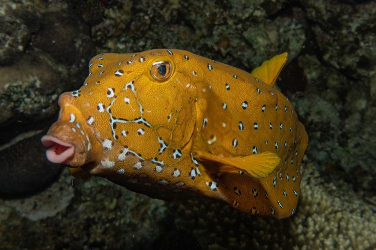 Fish swim in