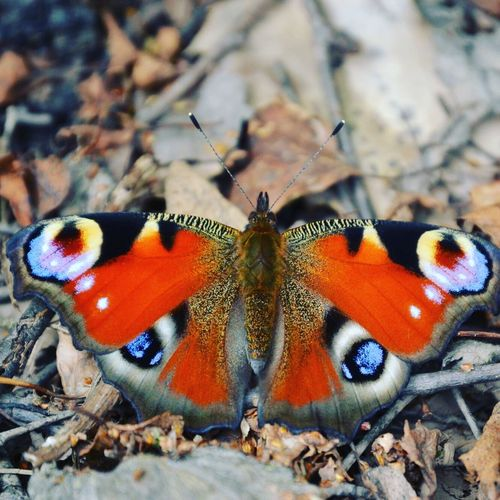 Beauty In Nature Beautiful Butterfly Outdoors