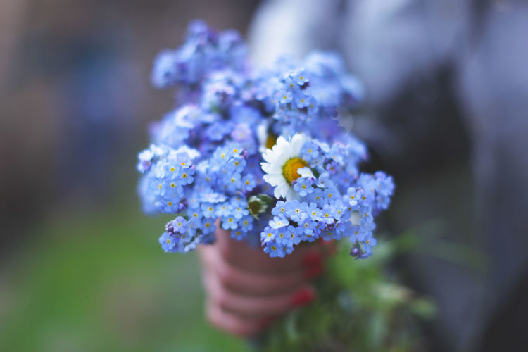 Midsection of woman holding forget-me-not