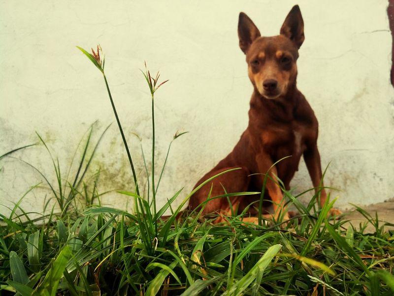 Dog❤ Pet Photography  Dogs Instapic Dogphotography I Love My Pet Dogoftheday Cagayan De Oro City CDO The Week On EyeEm Eyeem Philippines
