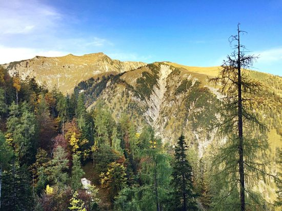 Autumn in Austrian alps Alps Austria Without Filters Forest Mountains Autumn Colors Autumn Leaves