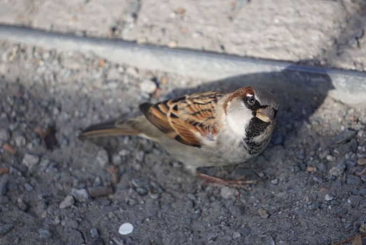 photogenic bird