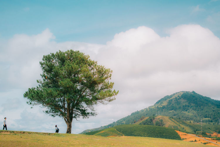 Tree On Field By Mountain Against Cloudy Sky