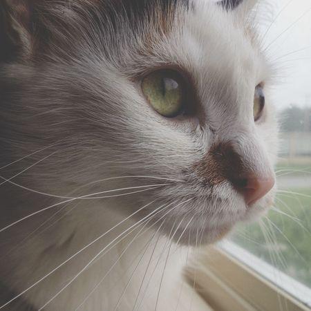 Animal My Fur Baby Cat