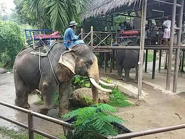 Enjoying Life Hi! I Love Thailand Camping Elephant Koh Samui Waterfall