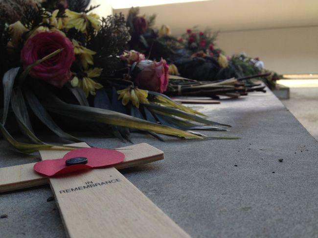 Beileid Dead Flowers In Remembrance Konzentrationslager NAZI Roses Tränen