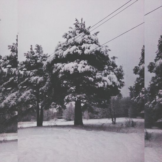 Park Tree Travel Winter