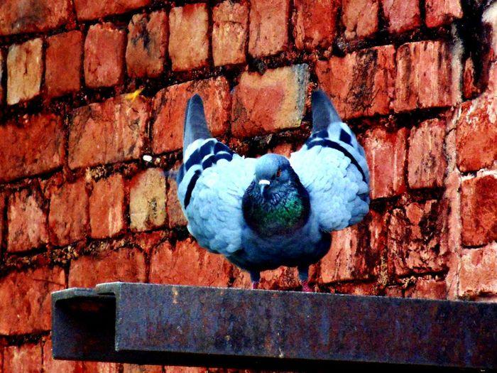 Ready_to_fly Birds Joy