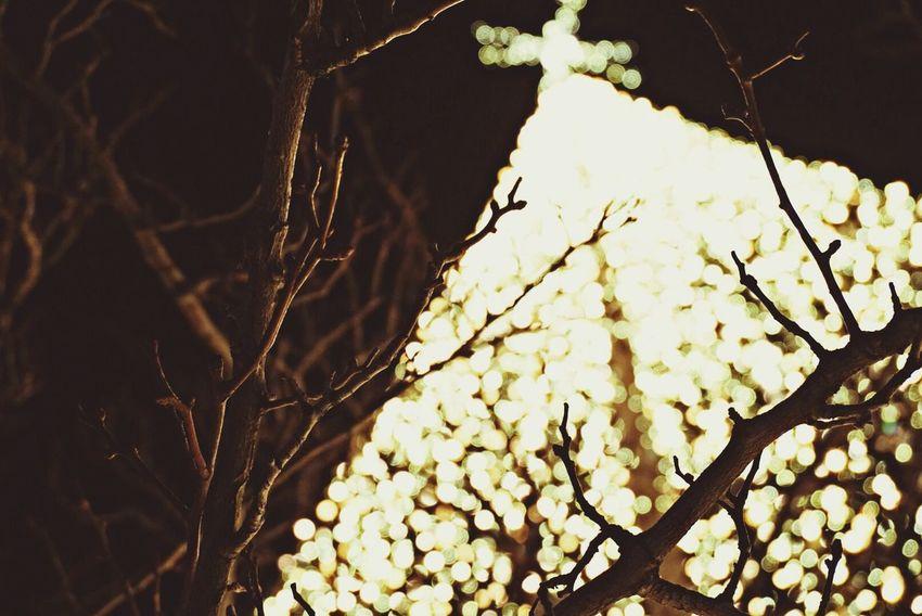 Christmas Tree Christmas Holiday Lights photography