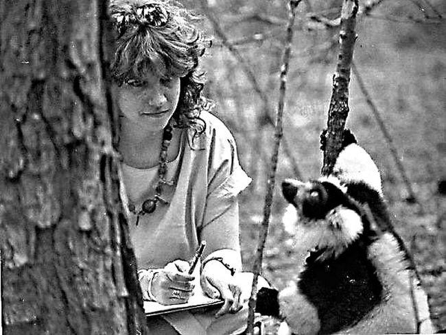 That's Me That's Canopus Black And White Ruffed Lemur Extremely Endangered Free Roaming Duke Lemur Center Hidden Gems  Animal Behavior Studies Primatology