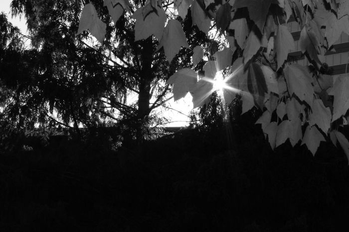 Black & White Downtown Hartford Ct  Peeking Through Riverside Shadows & Lights Sunlight Beauty In Nature Branch Citylife Close-up Day Focal Point Growth Low Angle View Nature No People Outdoors Peeking Sun Sky Sun Sunbeam Sunlight Tree