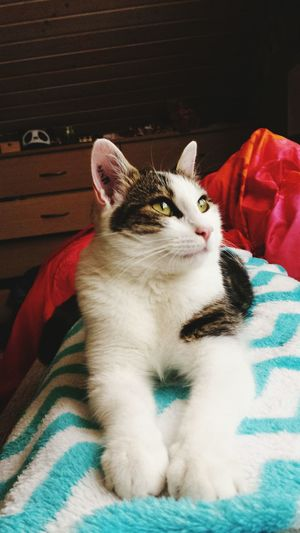 Cat Cat♡ Cat Lovers