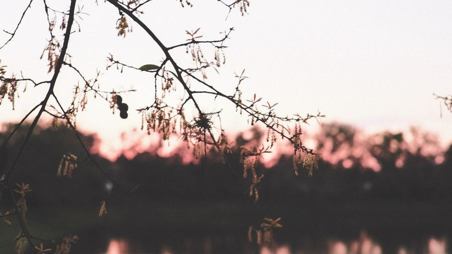 Floridian Sunsets Tree Plant Sky Nature No People Outdoors Beauty In Nature Silhouette Sunset Day Focus On Foreground Bare Tree Branch Growth Close-up Tranquility Wall - Building Feature Low Angle View Built Structure