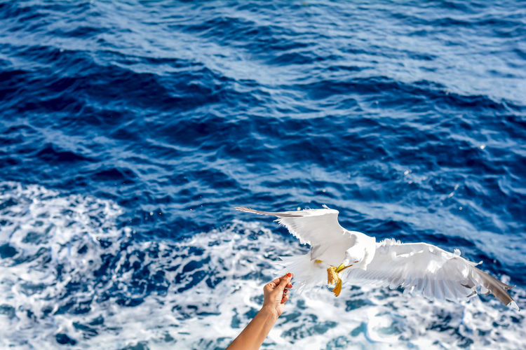 Cropped hand of woman feeding seagull against sea