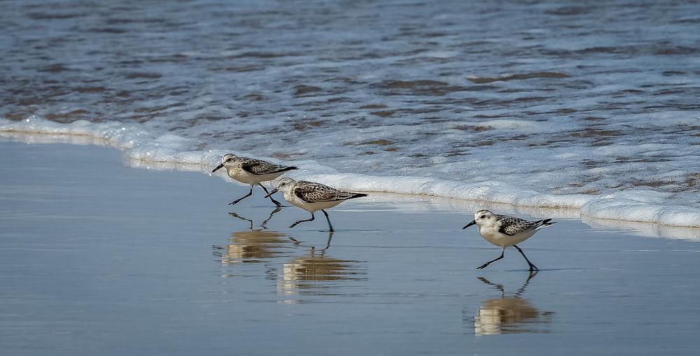 Running Birds