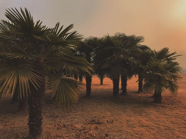 Wasted Pollution Palm Tree Tree Beauty In Nature Scenics Nature Growth No People Outdoors Sky