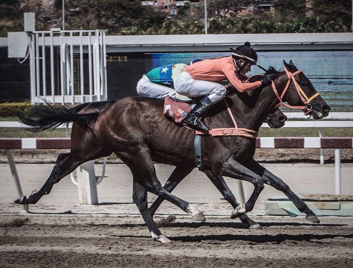 Por una cabeza -8- Sports Photography Horse Riding Horse Caballos