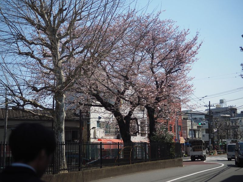 #cherryblossom Architecture Bare Tree Built Structure City City Life City Street Day Growth Lifestyles Nature Outdoors Road Sky The Way Forward Tree Tree Trunk Treelined