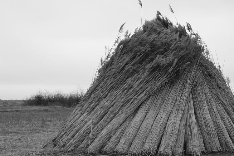 Reed Reed Stacks Agriculture Landscape Rural Scene Sky Black And White Collection  Black And White Photography Belo Blato Vojvodina Srbija