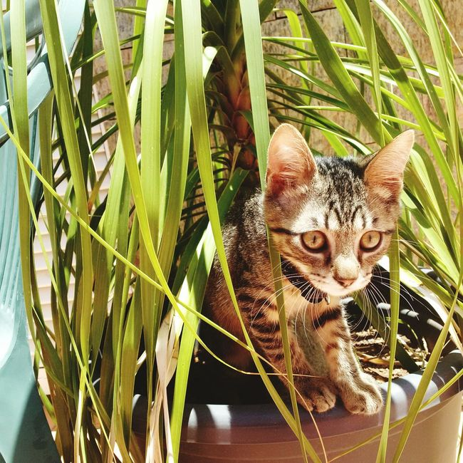 One Animal Domestic Cat Animal Themes Pets Domestic Animals Growth Plant Leaf Feline Day Mammal Nature No People Portrait Outdoors Close-up