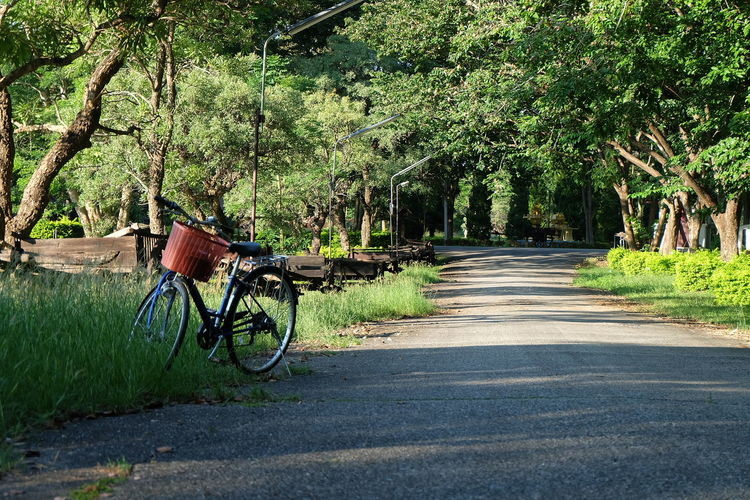Tree Plant Transportation Bicycle Growth Nature Land Vehicle Mode Of Transportation Direction Day The Way Forward Road Green Color Sunlight No People Land Outdoors Footpath Forest Tranquility