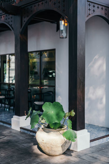 Green leaves Plant Potted Plant Architecture Green Color Built Structure Outdoors Building Houseplant Wood Wooden Structure Lotus Lotus Water Lily Lotus Leaf Building Part Oriental ASIA Tropical Tropical Architecture Casual Clothing Cafe Restaurant Exterior Property