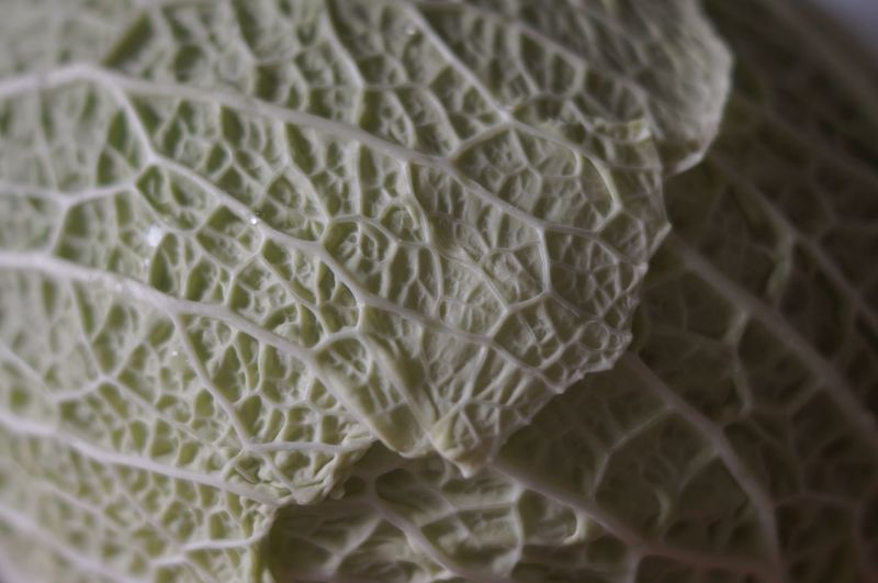 Food Photography Healthy Eating Choux Lettuce Green Cabbage Légumes Vegetable Fresh Produce Foodphotography Healthy Food