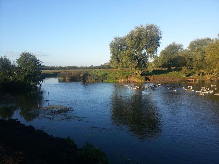 Lake Olney Buckinghamshire Outdoors River View Riverscape Samsung Galaxy S3 Water Wildlife Birds Pmg_lon