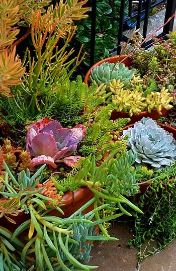 Close-up of plants