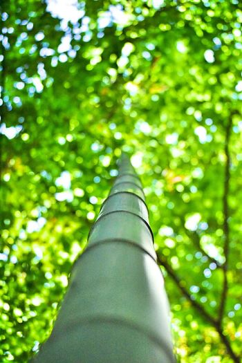 Tree Green Color Low Angle View Outdoors Day Bamboo - Plant Forest Nature Close-up No People