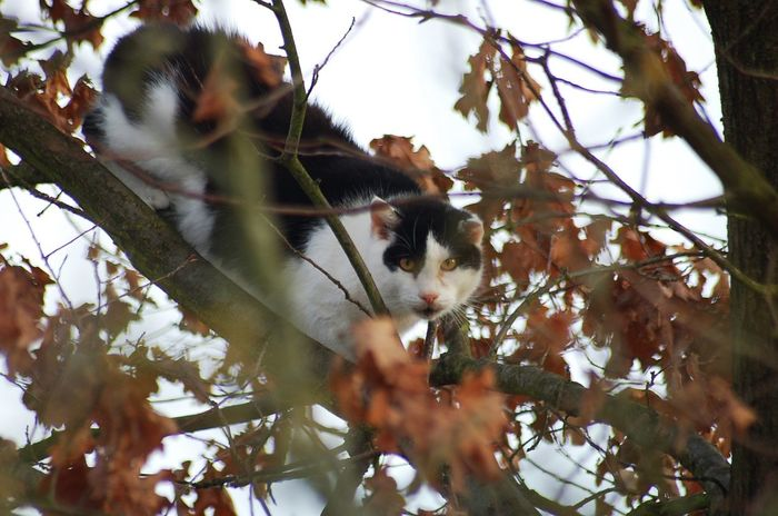 cat in tree Cute Cuteanimals Sweetanimal Nature Nature Photography Colour Sunnyday Nopeople Beautiful Outdoor Photography Outside Outdoor Beauty In Nature Cat Sweet Cute Pets Cutecats Sweetcat Lovely Lovelycat Beautifulcat No People Catintree Tree Animalphotography Animal Photography
