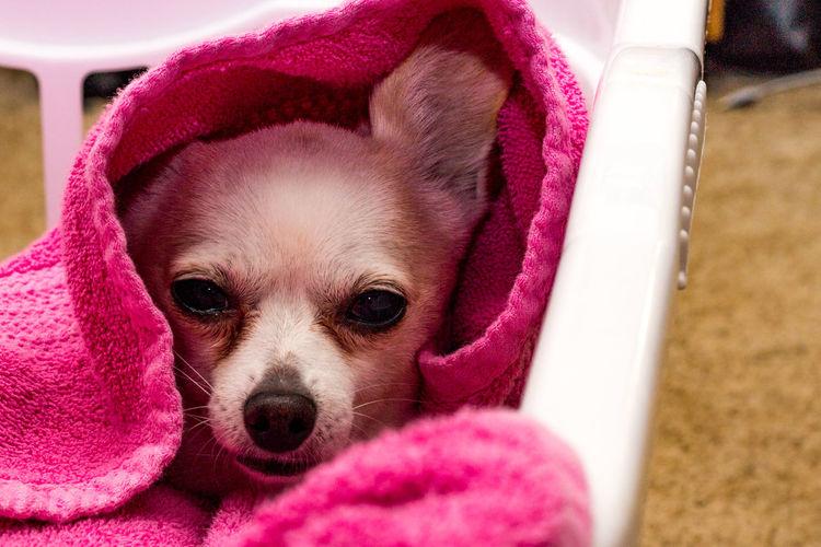 #canon1200d Santa Rosa Dog No People Pets Pink Color Portrait Sonoma County
