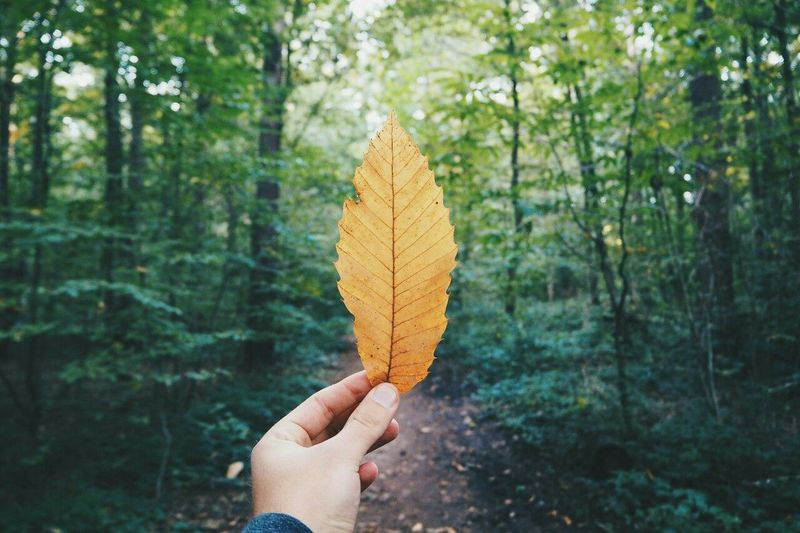 Autumn Fall Forest Leaf Leaves Nature Outdoors Trees Vintage WoodLand