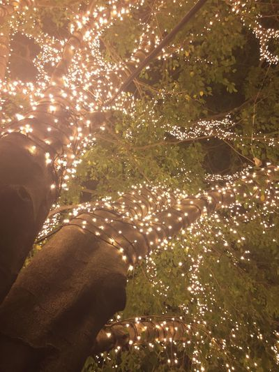 Midsection of man with illuminated tree