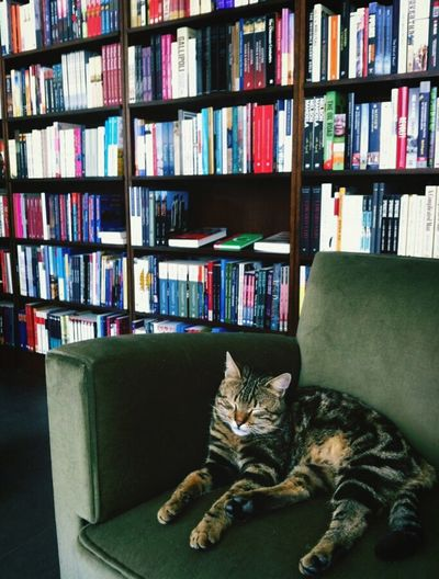 Come and read more and more but do not disturb me! Cat Lovers Library Reading A Book