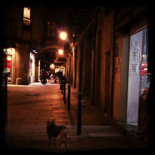 """Serie: Gossos Que Esperen"""" #bcn #born #gos #chien #perro #dog"""