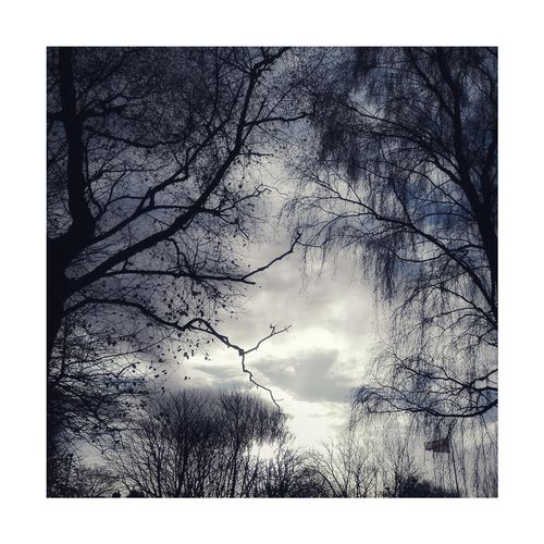Birch trees Sky Tree Silhouette No People Day Outdoors Nature Horwich Black And White Photography Monochrome Lovelancashire Autumn Tree Nature Autumn🍁🍁🍁 Leaf Beauty In Nature Bare Tree Branch Low Angle View Scenics