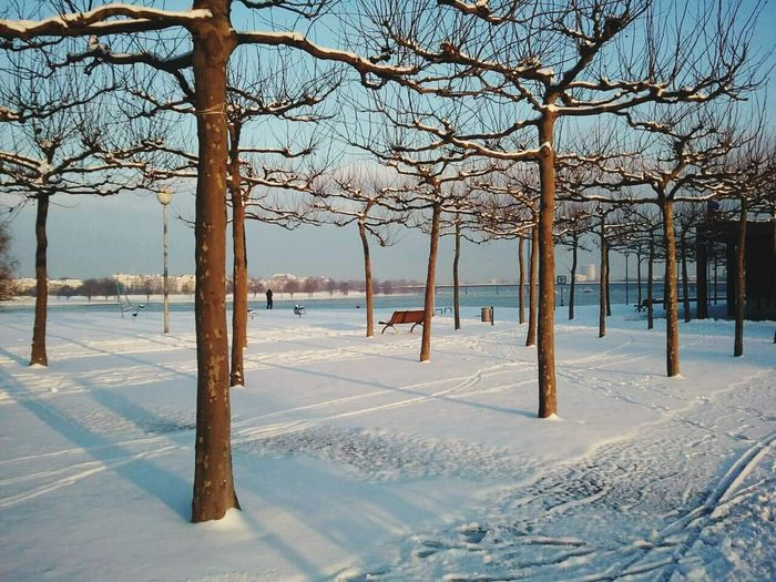View Of Bare Trees On Snow By River